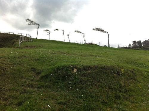 Træerne vidner om, at det nogle gange stormer fra vest ved Biscaya-bugten