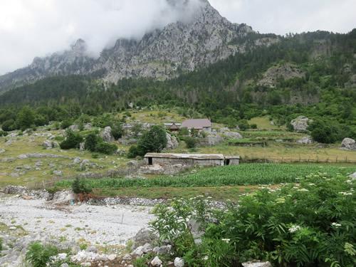 Vi besøger Tahir og hans familie i landsbyen Kukaj i det bagerste af kun to huse. Bemærk at i 1.300 meters højde blomstrer hylden først midt i juli.